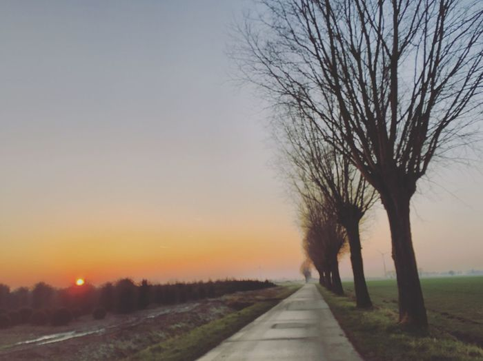 Road to The sun Tree Nature The Way Forward Bare Tree Road Tranquility Beauty In Nature Clear Sky Tranquil Scene No People Scenics Sunset Sky Landscape Outdoors Day