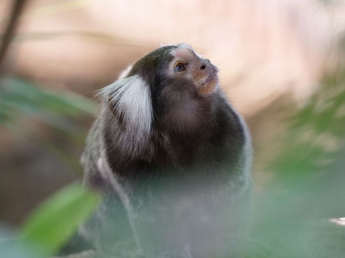 Kobe-shi,Japan EyeEm Selects Animal Wildlife One Animal Animals In The Wild Mammal Focus On Foreground Vertebrate