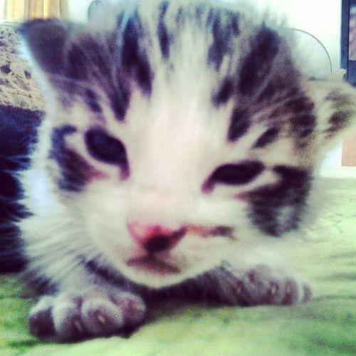 Cat Byutiful El Mas Tierno
