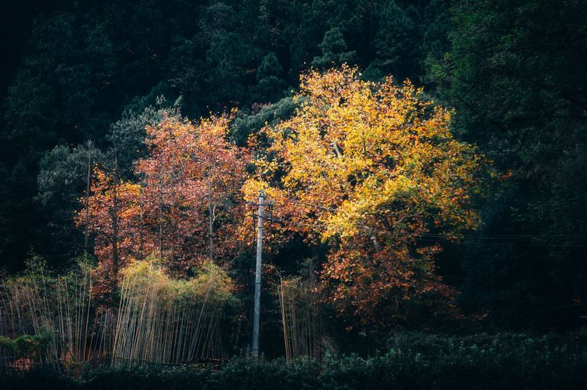 Surreal Fall Edition 05 Landscape Surrealism Beauty In Nature Tree Autumn Nature Change Tranquility Beauty In Nature EyeEm Ready   Growth Outdoors Tranquil Scene No People Leaf Scenics Day Forest EyeEmNewHere