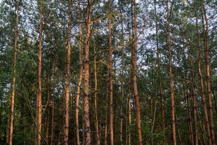 Het Zandenbos is a forest area in Nunspeet The Netherlands Nunspeet Tree Trees Forest Forest Photography Holland Rondehuis Zandenbos