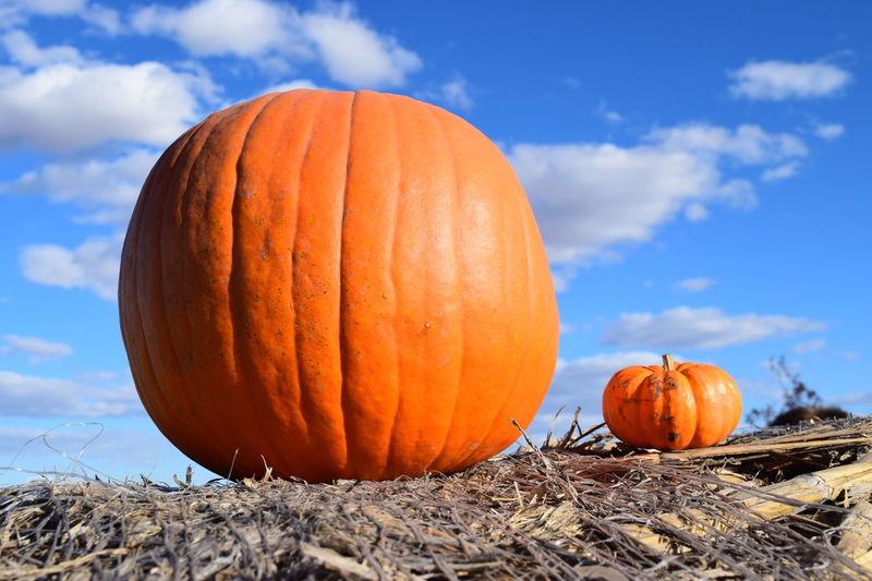 BIG Big Pumpkins Halloween Pumpkin!Pumpkin! Pumpkins Different Halloween 2018 Halloween Pumpkins Insaine Original Photography Pumpkin Small Small Pumpkins First Eyeem Photo