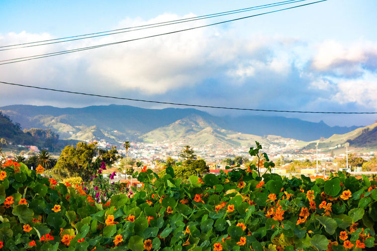 Beauty In Nature City Citylife Cloud - Sky Clouds And Sky ExploreEverything Flower Flower Head Going For A Walk Growth La Laguna Landscape Lightandshadow Mountain Mountain Range Old Town Plant Power Cable Rural Scene Santa Cruz De Tenerife SPAIN Tenerife Tenerife Island Vale Wanderlust