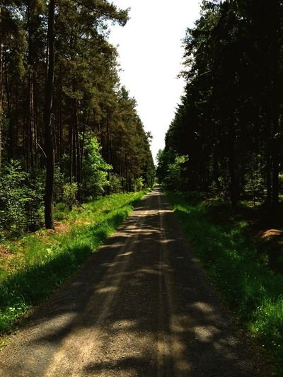 Country road along trees