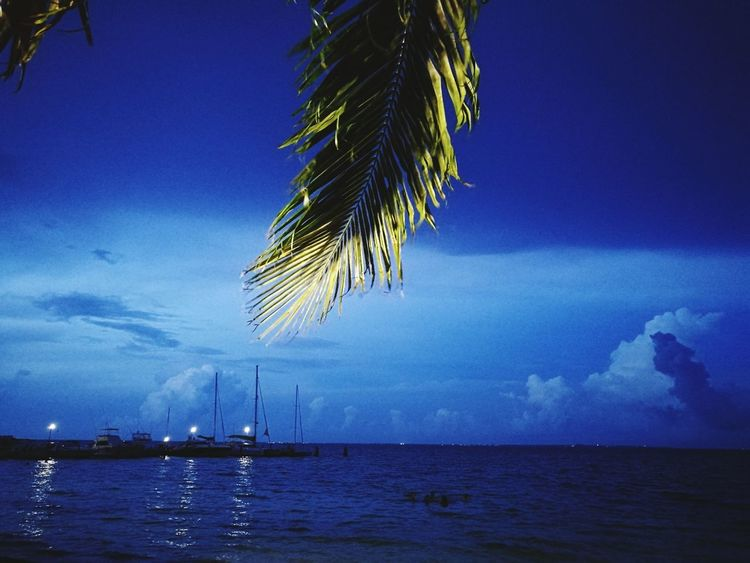 Caribe Caribe Mexicano Beauty In Nature Sea Blue Water