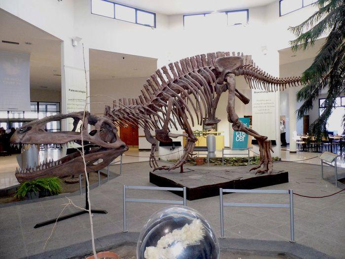 Dinosaur Argentina Tiranosaurio Rex Museo Museo Paleontológico Trelew Patagonia