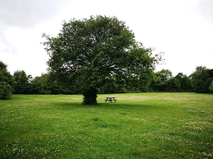 Tree & Table