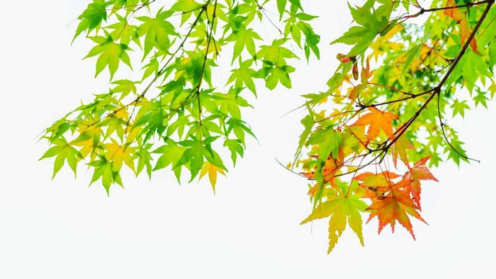 Last summer in Japan Japan Kyoto Summer Travelphotography Showcase: November Mybestphoto2015 UltimateJapan Ultimate Japan Eyeemcollection EyeEm Gallery EyeEm Nature Lover Eyeem Collection Place Of Heart EyeEm Selects