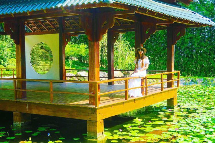 Paradise Japon Garden Lotoflower