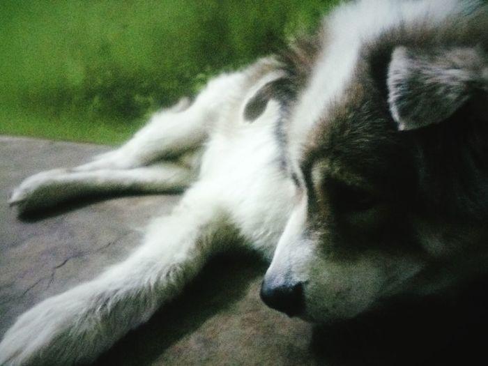 เศร้า First Eyeem Photo Pet Portraits