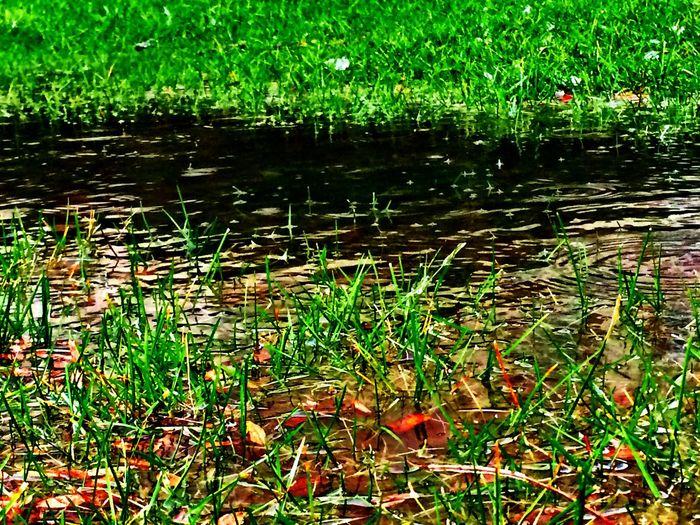 Flood Grass