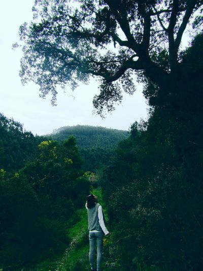 Going to my fairy tail... Nature Beauty In Nature Day Outdoors Fairytales & Dreams Old Trees Castelo De Paiva Portugal Beautiful Nature Beautiful View River View Green Green Green!