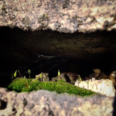Nature Beauty In Nature Microscape  Concrete Moss Close-up Microcave