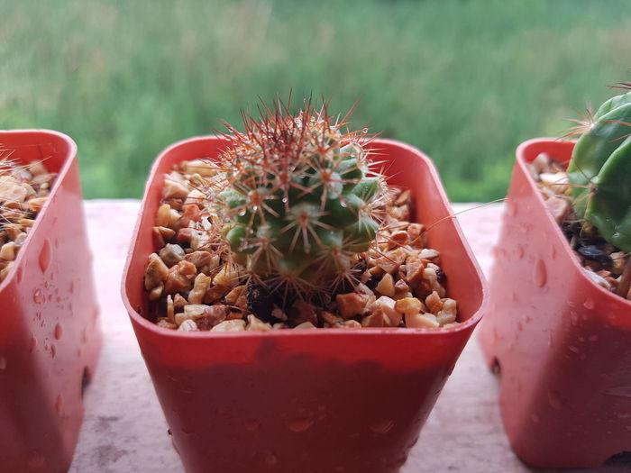EyeEmNewHere Eyeemmarket EyeEm EyeEm Selects Green Cactus Thorn Potted Plant Close-up Plant