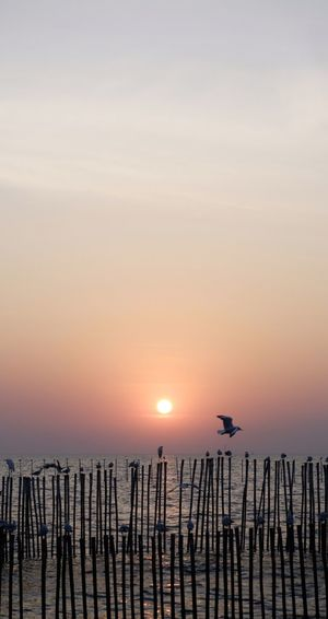 Silhouette of seagulls on wooden post in sea during sunset