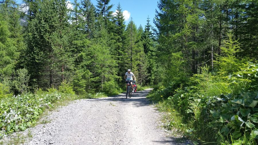 Man Riding Bicycle Amidst Trees On Road At Forest