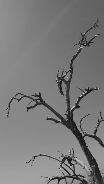 Bare Tree Beauty In Nature Black And White Branch Dead Tree Monochrome Nature No People Outdoors Sky Tree
