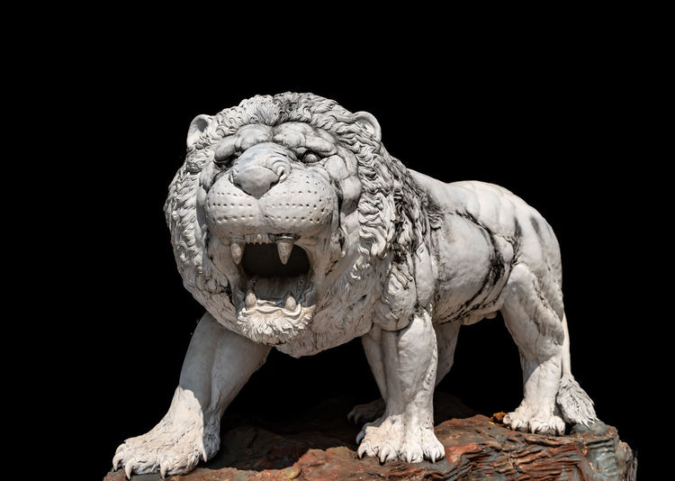 White lion statue on black background Black Background Animal Animal Themes Studio Shot No People Sculpture Animal Wildlife Art And Craft Representation Animal Representation One Animal Craft Creativity Mammal Statue Lion - Feline Copy Space Indoors  Feline Close-up Mouth Open Animal Head  Copy Space