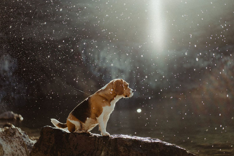 View of a dog in rain