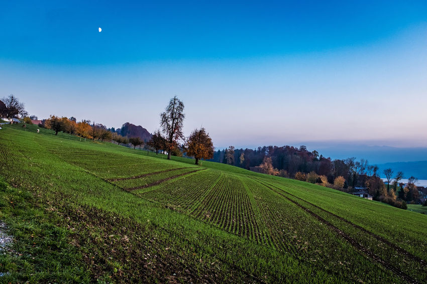 Landscape Agriculture Scenics - Nature Field Sky Land Plant Environment Beauty In Nature Rural Scene Tranquil Scene Tranquility Green Color Crop  Tree Growth Nature Farm No People Idyllic Outdoors Plantation