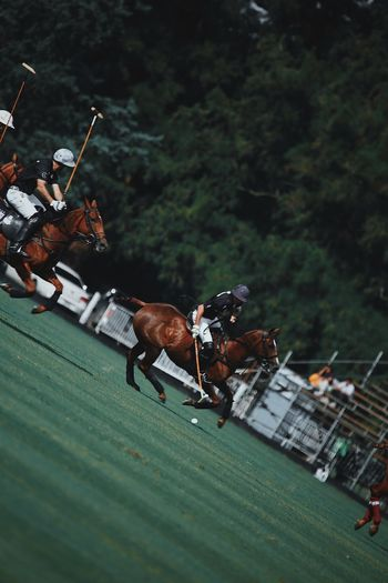 Group Of People Sport Animal Wildlife People Domestic Animals Mammal Domestic Real People Men Livestock Tree Horse Competition Running Plant Day Outdoors Nature
