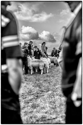 Agricultural show in Swinford, Ireland. August 2017 Ireland Agriculture Domestic Animals Real People Mammal Men Livestock Day Sheep Pets Spectator Outdoors Field