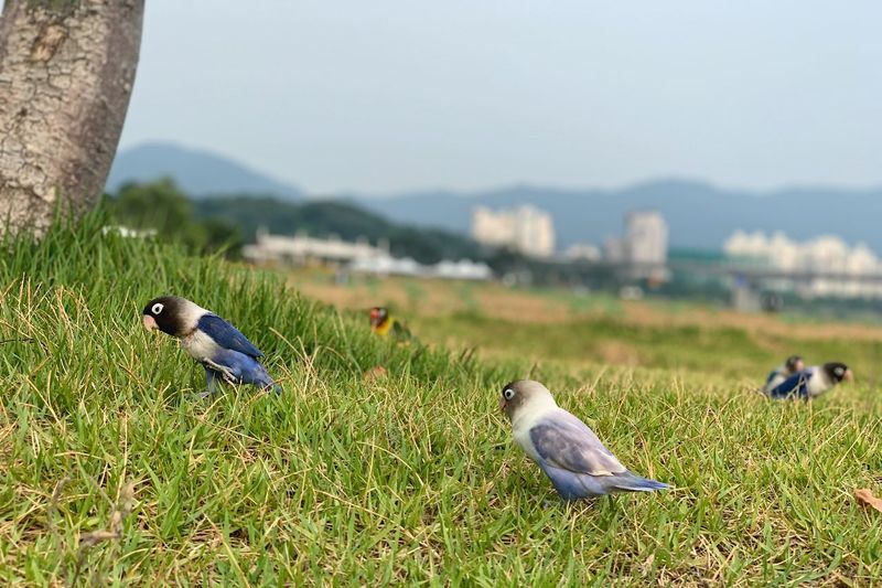 Birds perching on a field