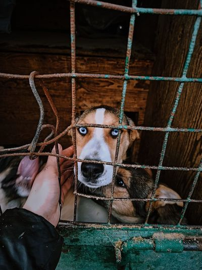Cropped hand of person by dogs in cage