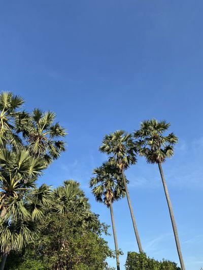 Clear sky Tree