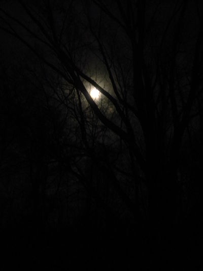 Astronomy Backgrounds Bare Tree Beauty In Nature Branch Bright Night Dark Full Moon Growth Haunted Illuminated Moon Moon Light Moonlight Nature Night No People Outdoors Scenics Silhouette Sky Supermoon Tranquil Scene Tranquility Tree