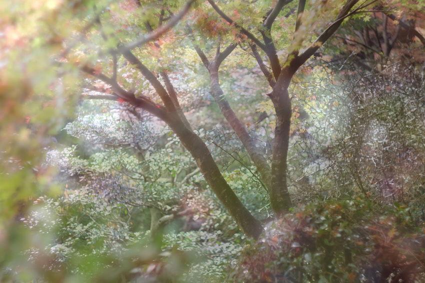 X-T10 Fujifilm_xseries Helios Helios 44-2 ミラーレス オールドレンズ Japan Photography Japan 多重露光 FUJIFILM X-T10