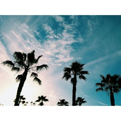 Blu. Blue Vscocam VSCO Palmtrees SkyPotdIloveCloudsOsideHaveARadDay