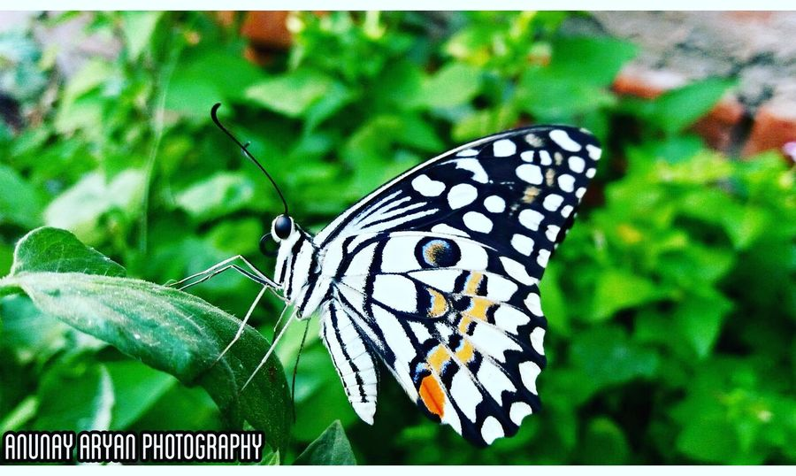 Photography Nature Photography Butterfly India Cool Shades Clicked