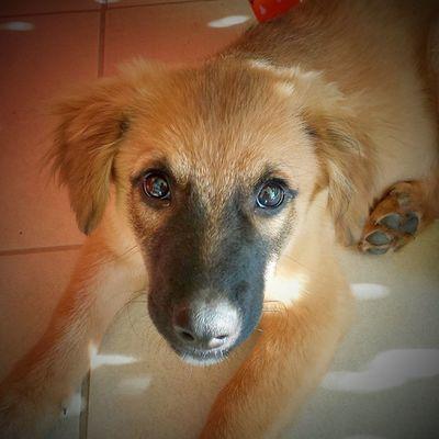 Dog Canemeticcio Cane Meticcio lovedog puppy