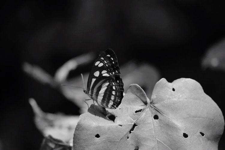 Butterfly On Leaf During Sunny Day
