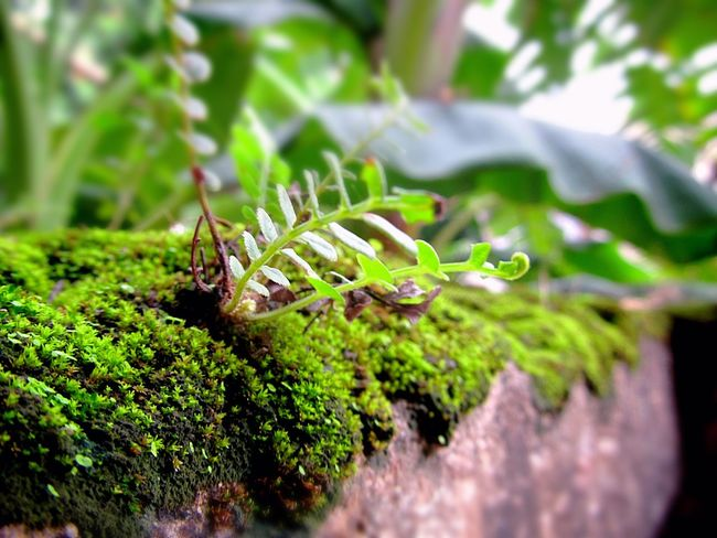 Moss Close Up Moss Moss-covered Moss In Macro Nature Nature Photography Freshness New Life Life Nature_collection