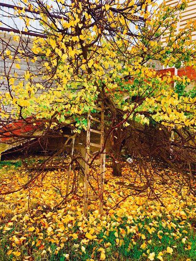 Autumn has an