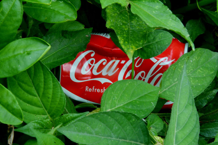 Coca Cola CarbonatedDrink EstaBlished Popular Drink In Malaysia Waste Leaf Text Plant Part Red Communication Green Color Close-up Nature No People Food Day Sign