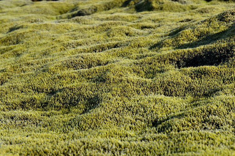 Moss Iceland Drivebyphotography Mossy Nature Nikon D3200