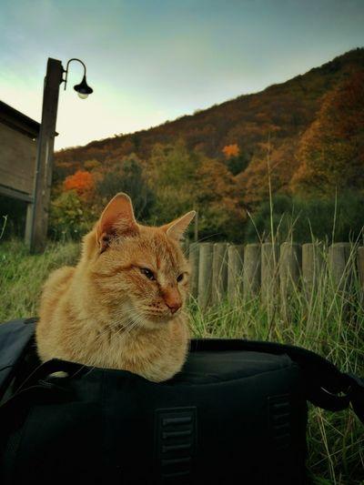 Cat looking away in car