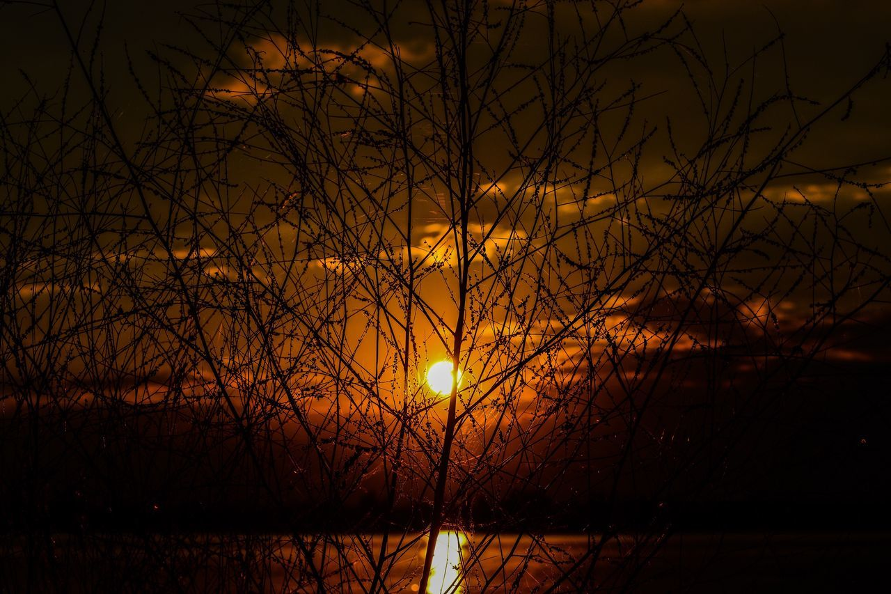 sun, sunset, beauty in nature, nature, orange color, scenics, tranquil scene, tranquility, silhouette, outdoors, no people, sky, yellow, tree, bare tree, growth, moon, branch