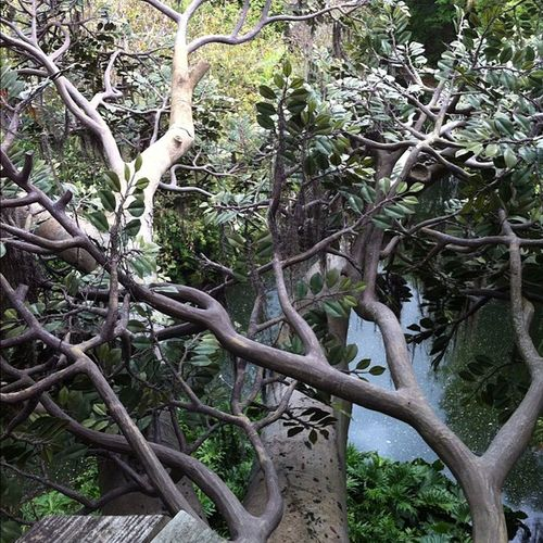 Swissfamilyrobinson Treehouse Magickingdom Disney