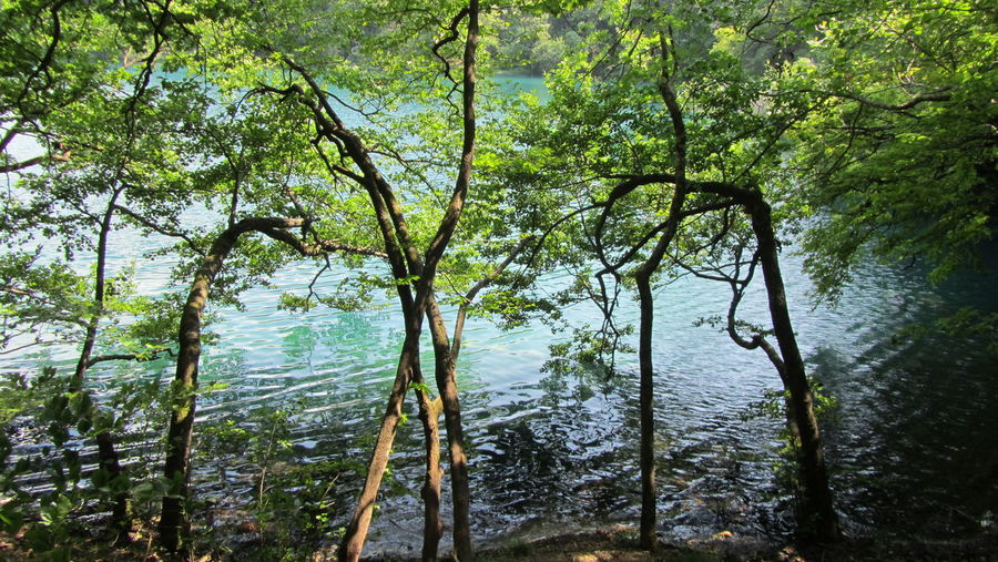 Nature Tree Water Growth Tranquil Scene Tree Trunk Tranquility Lake Plant Scenics Nature Beauty In Nature Green Color Day Outdoors Non-urban Scene Remote Calm Growing Plitvice National Park Plitvice Lakes National Park Plitvickajezera Croatia