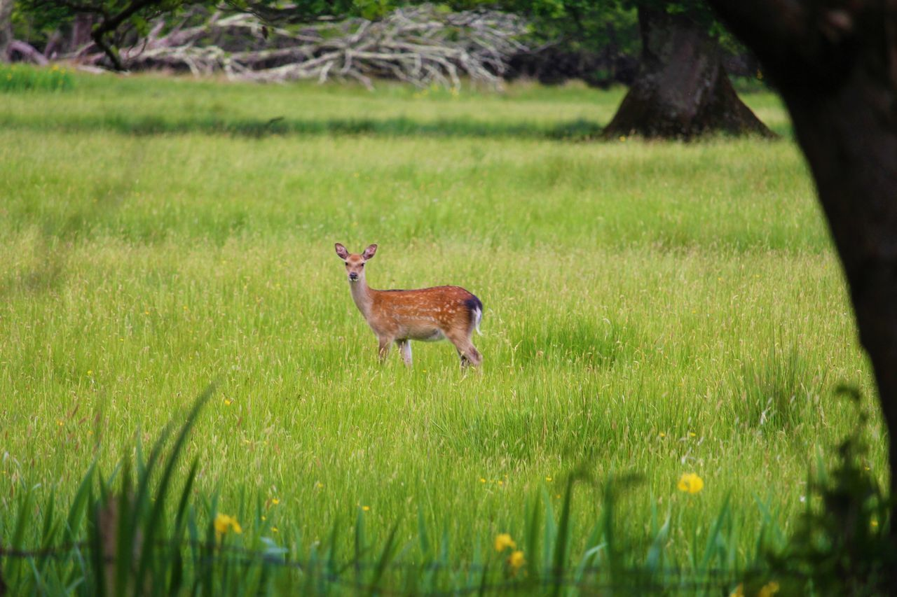plant, grass, animal, animal themes, field, mammal, land, vertebrate, domestic animals, one animal, nature, green color, selective focus, day, no people, growth, pets, domestic, livestock, animal wildlife, outdoors, herbivorous