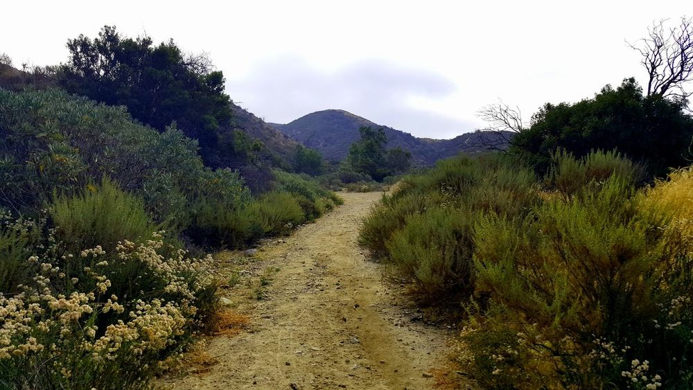 Wild Wilderness Hiking Path Trail Nature Natural Space