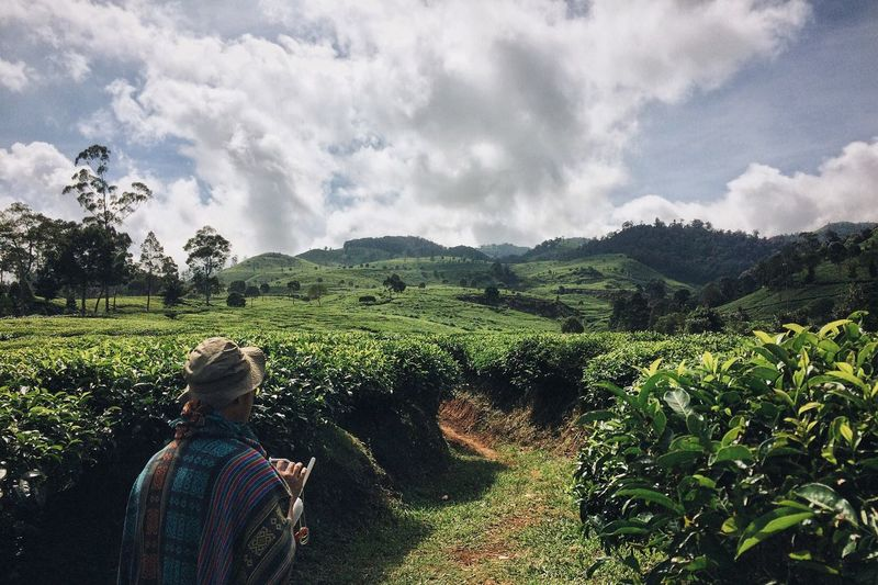 Rear view of man walking on pathway amidst tea crops