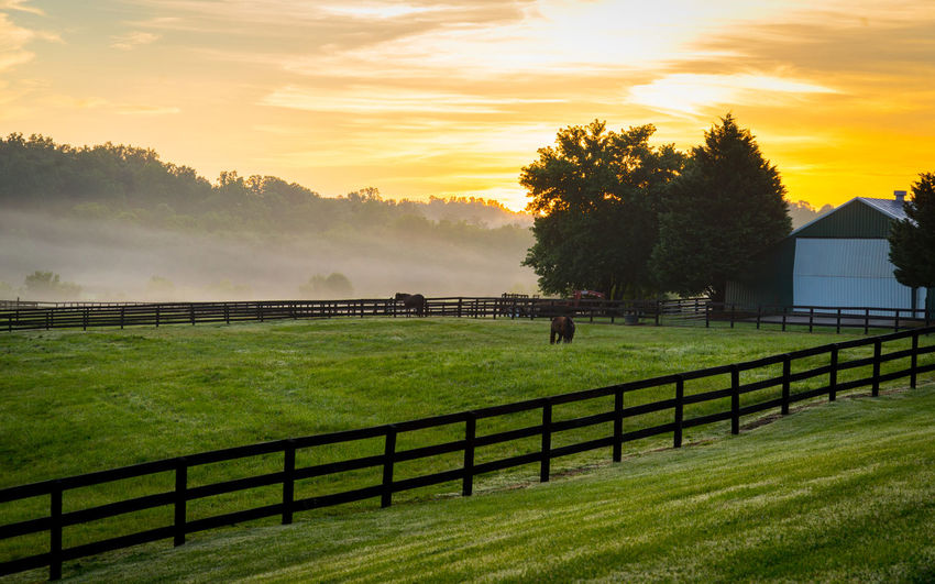 Horses awake early! Beauty In Nature Farm Fence Grass Horse Landscape Landscape_photography Nature Nikonphotography Outdoors Pasture Scenics Tranquil Scene Tranquility