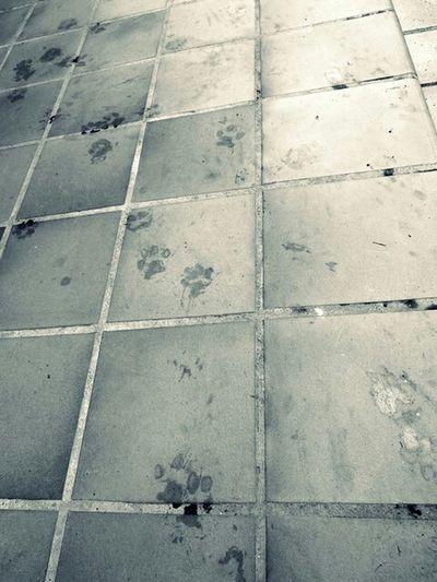 Footsteps Dog Taking Photos