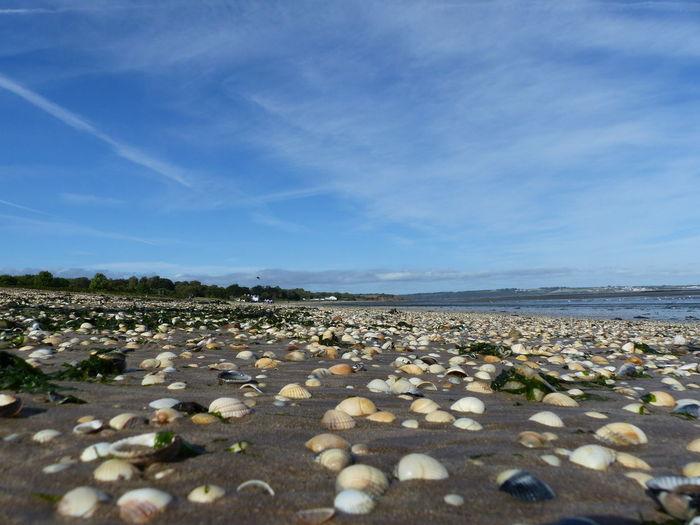 woodstown beach Seashell Seashells Seashells, Rocks, Sand Seashell❤ EyeEmNewHere My Best Travel Photo