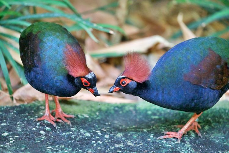 Close-up of two birds